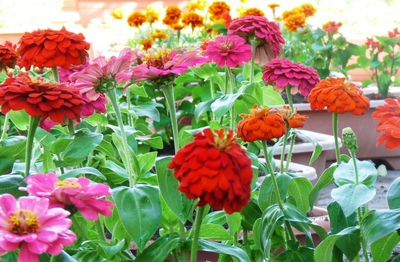 flowerpot01.jpg
