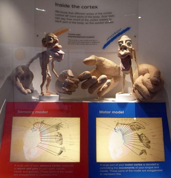 ロンドン自然史博物館のホムクルスの小人